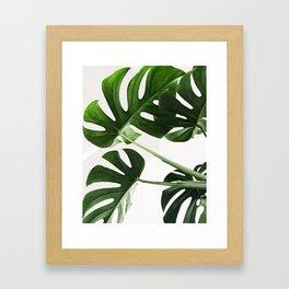 CloseUp Monstera Framed Art Print