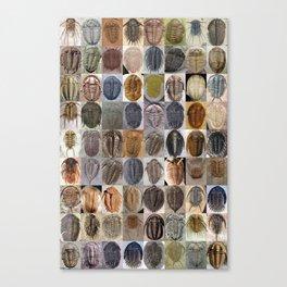 Trilobite Montage Canvas Print