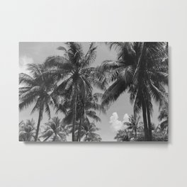 Palm Trees Black and White Photography Metal Print