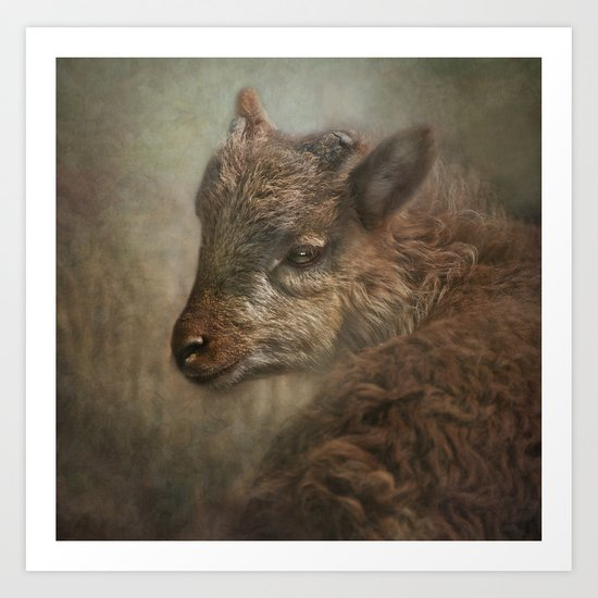 Soay Kid Art Print