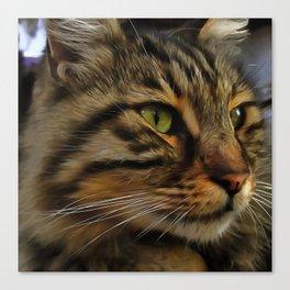 Aslan The Long Haired Tabby Cat Canvas Print