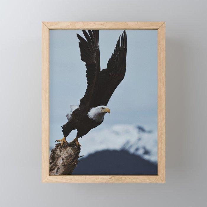 Alaskan Bald Eagle Framed Mini Art Print