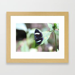 Costa Rican Beauty Framed Art Print