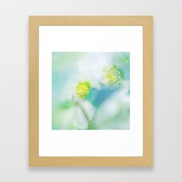 Soft Hellebores Framed Art Print