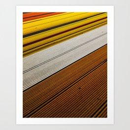 Dutch Flowerfields Art Print