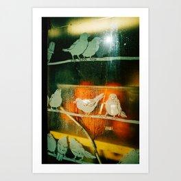birds and orange  Art Print