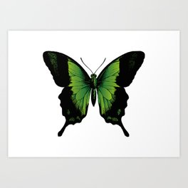 Green Butterfly | Vintage Butterfly | Green and Black | Art Print