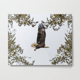 October Eagle II Metal Print