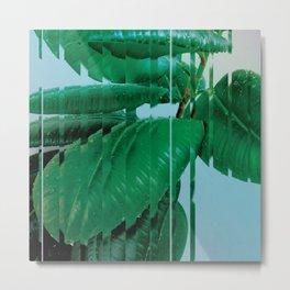 Plant After Rain / Ficus Elastica Metal Print