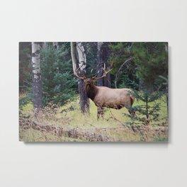 The Canadian Unicorn (Elk) Metal Print