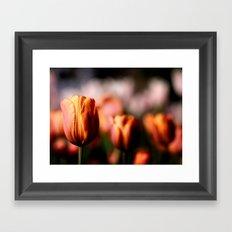 Colorful spring tulips Framed Art Print