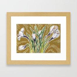 Crocuses Framed Art Print