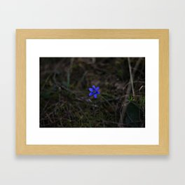 Anemone Hepatica Framed Art Print