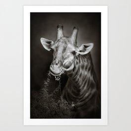 African Giraffe portrait Art Print