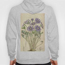 Anemone angulosa Curtis' 91 (Ser. 3 no. 21) pl. 5518 (1865) Hoody