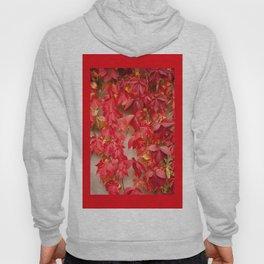 Vitaceae ivy wall abstract Hoody