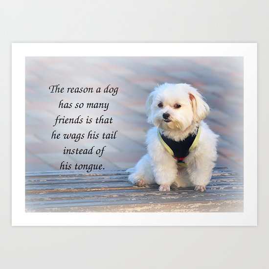 A Cute Bichon Dog Sits Patiently on a Bench Art Print