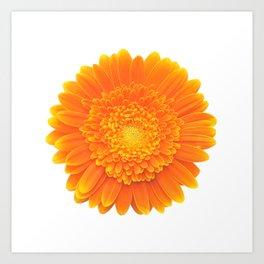 orange flower Art Print