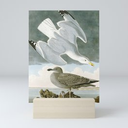 Seagulls Illustration - Birds in America Mini Art Print