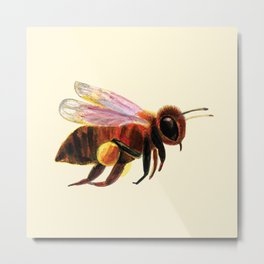 Honey Bee with Pollen Baskets Illustration Metal Print