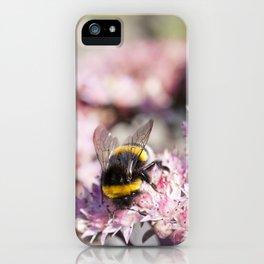 Bumblebee On Stonecrop – Hummel auf Fetthenne iPhone Case