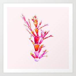 Corallina Seaweed Art Print