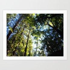Santa Cruz Big Trees Art Print