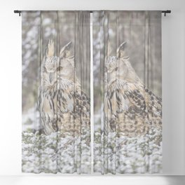 Western Siberian Eagle Owl Sheer Curtain