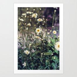 Daisy IV Art Print