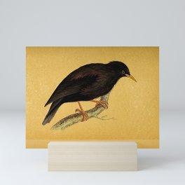 Sardinian Starling Mini Art Print