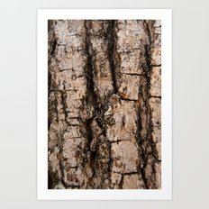 Bark aberration Art Print