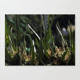 Red Hash Canvas Print
