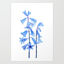 botanical bluebell flowers watercolor Art Print