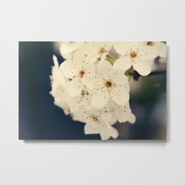 Bradford Pear Tree Flowers Metal Print