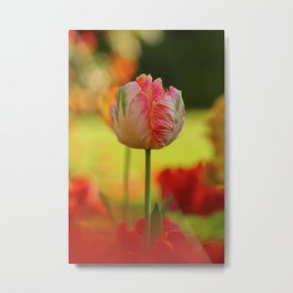 Tender Young Parrot Tulip in the Garden in Spring Metal Print