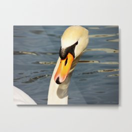 Swan throwing shade Metal Print