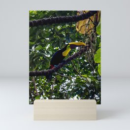 Costa Rican Toucan Mini Art Print