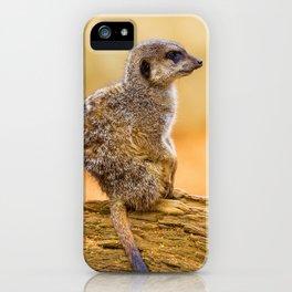 Meerkat (Color) iPhone Case