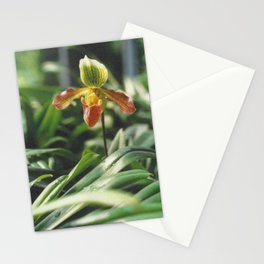 Orchidea. Orchidée. Orchid Flower. Stationery Cards