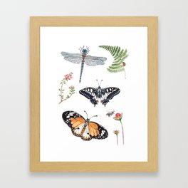 The insects Framed Art Print