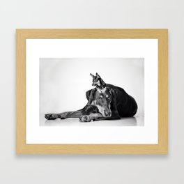 Best Buds - Dalmatian and Chihuahua Dogs Framed Art Print
