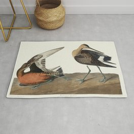 Eared Grebe from Birds of America (1827) by John James Audubon (1785 - 1851) etched by Robert Havell Rug