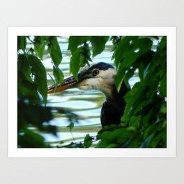 Hiding Heron Art Print