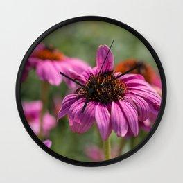 Pink Rudbeckia flower in summer garden Wall Clock