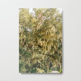 Savannah National Wildlife Refuge II Metal Print