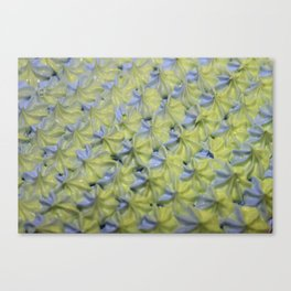Piped Stars Canvas Print