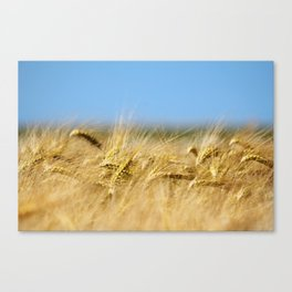 Blue & Gold Canvas Print