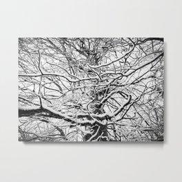 Winter Wonderland 3 Metal Print