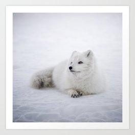 White snow arctic fox Art Print