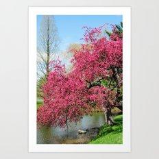 Spring Crabapple Blooms Art Print